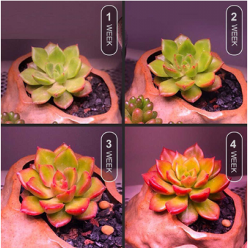 EZYGRO Succulent Grow Light