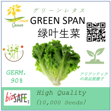 Japanese High Quality Seeds: GREEN LETTUCE