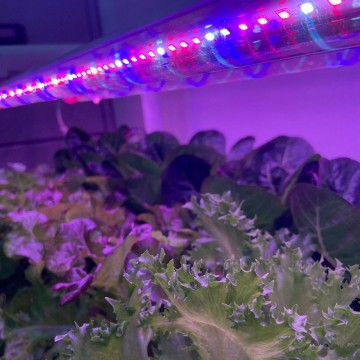 SMARTGROWER Homes / Offices  Cultivation Kit