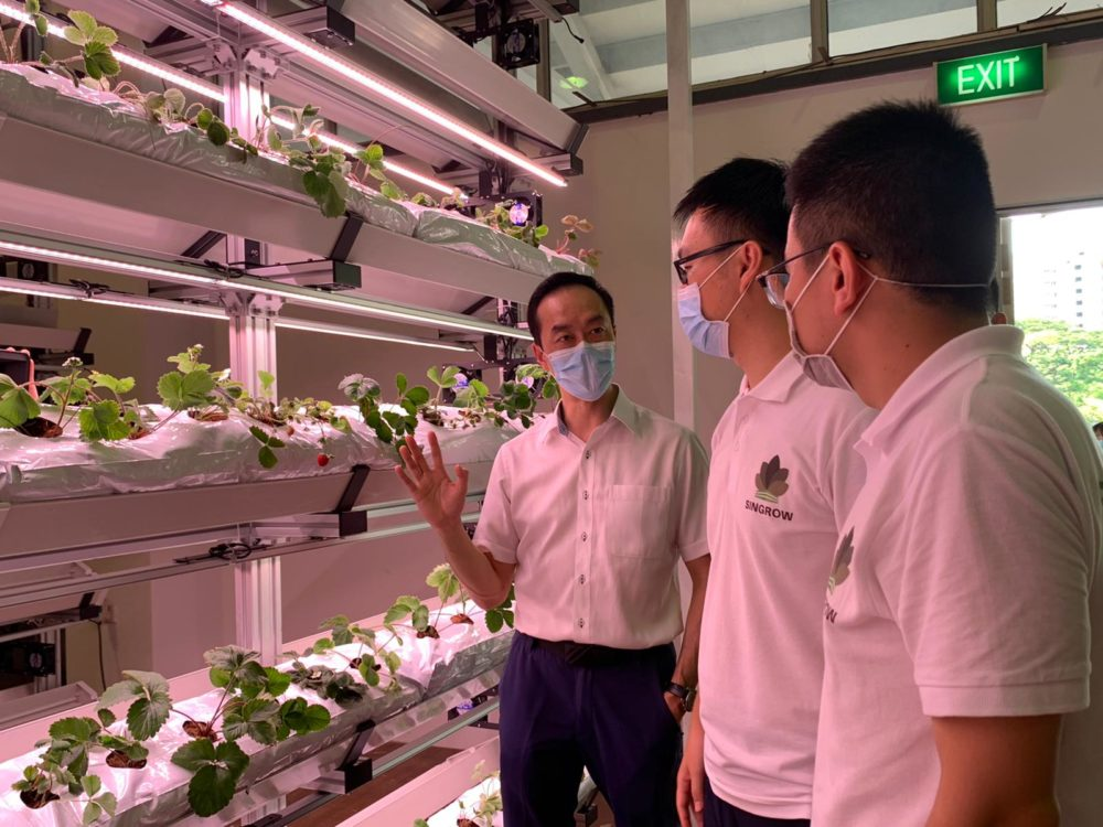 Agfundernews repoort highlights Arianetech's clent- Singrow Strawberry Project