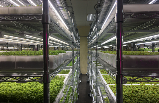 Farm Delight Indoor farming-Biggest Microgreen Project in Singapore